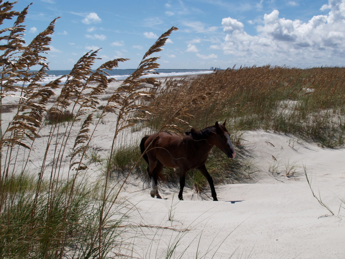 Cumberland Island Beaches